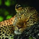 Top 5 Best Big 5 Safaris in Africa