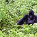 Uganda safari planning tips