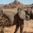 Five Awesome Activities to do in Namibia