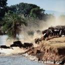 Get the best of both worlds on a value-for-money Great Migration safari