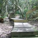 Four fantasy forests to explore in South Africa